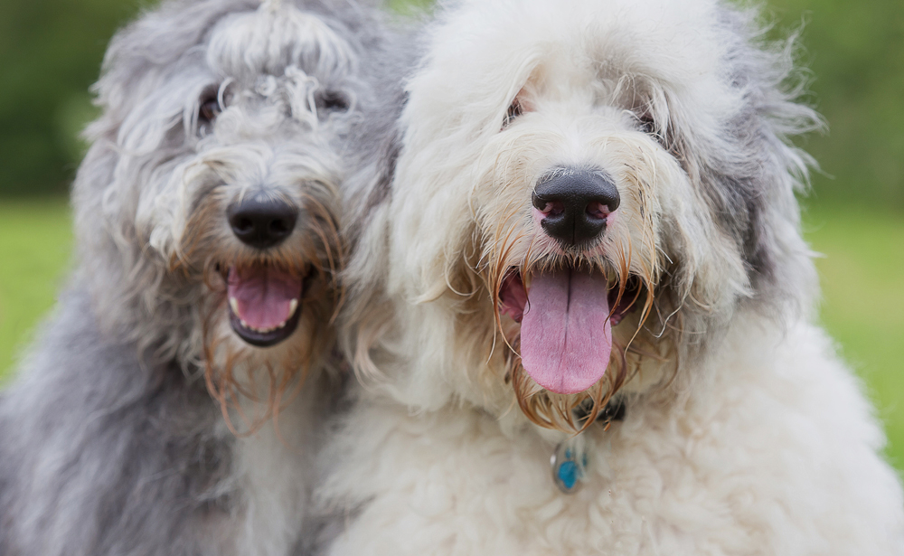 Pet photographer Oundle dogs