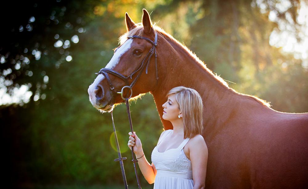 horses portraits Oundle equine
