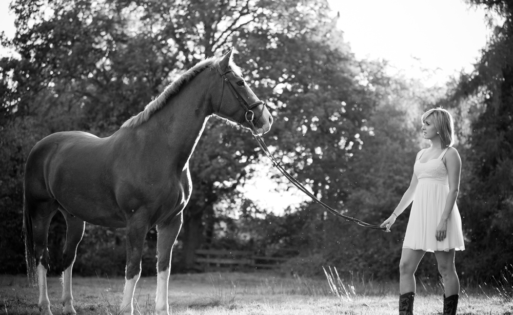 horses portrait photography Oundle equine