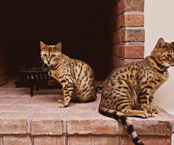 Oundle Pet Animal Photographer
